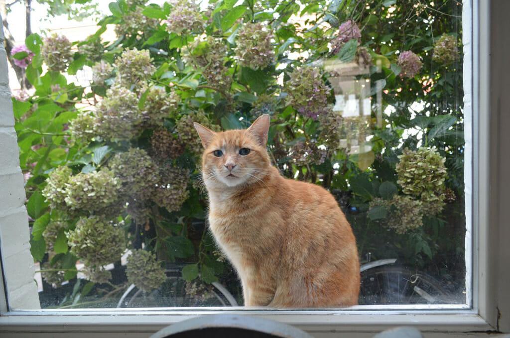 Cat in Richmond renovation